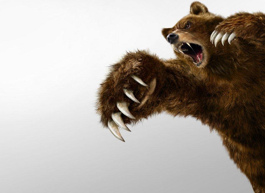 Интересная история про то, как мы повстречались с медведем