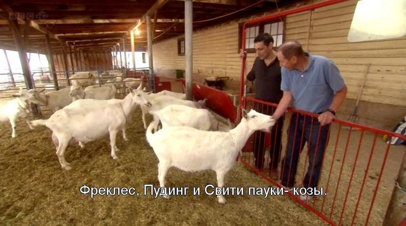 Зачем коз скрестили с пауком, и удалось ли ученым это сделать