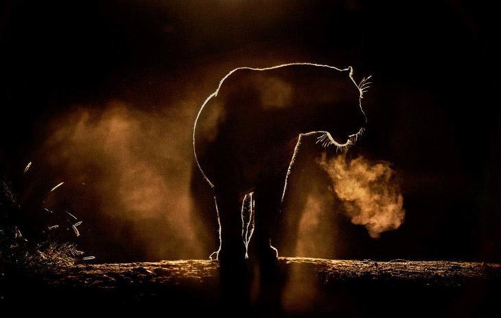 Силуэты животных Африки