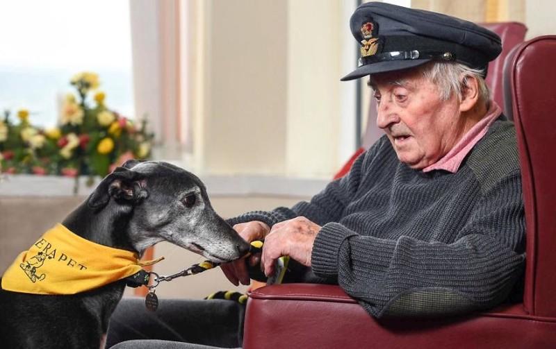 """1 место в категории """"Собаки-помощники"""" - Аласдер Маклеод, Великобритания Кеннел клаб, животные, конкурс, лондон, портрет, собаки, фото, фотография года"""