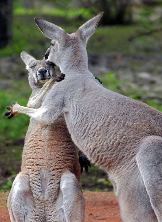 Животинки, обнимашки