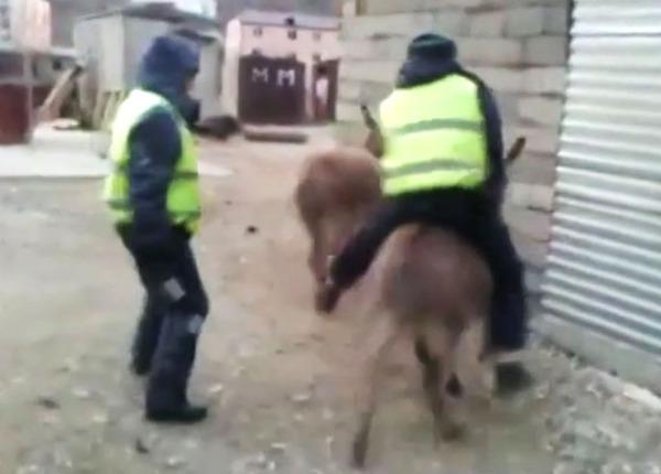 Полицейских Дагестана проверяют за катание на ослике