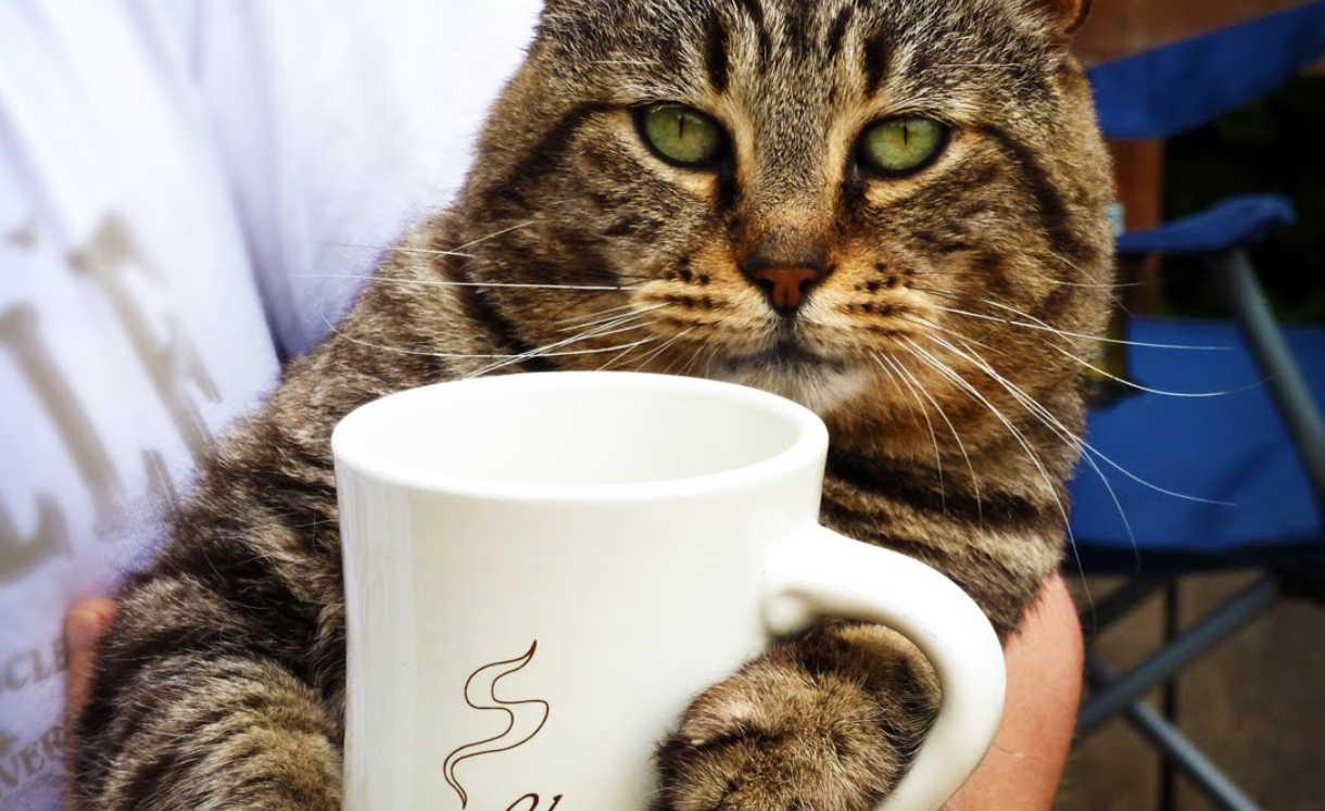 10 способов применения спитого кофе: польза кофейной гущи