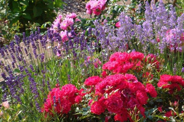 Крупные нежно-розовые и малиновые розы изумительно смотрятся в соседстве с мелкими фиолетовыми и сиреневыми цветами