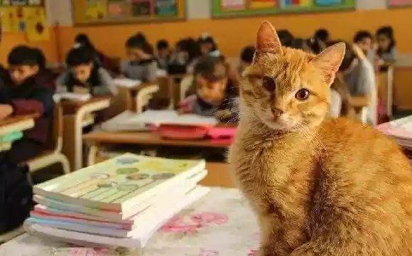 Этот кот работает в школе
