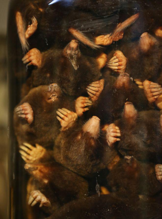 gmoz23 Лондонский музей зоологии и сравнительной анатомии Гранта
