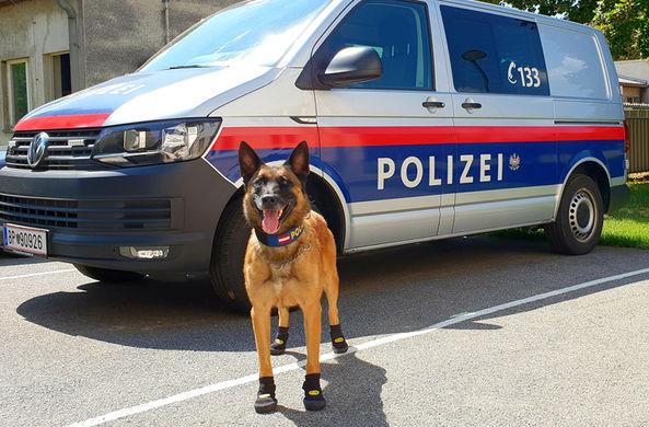 В Вене полицейских овчарок обули в ботиночки