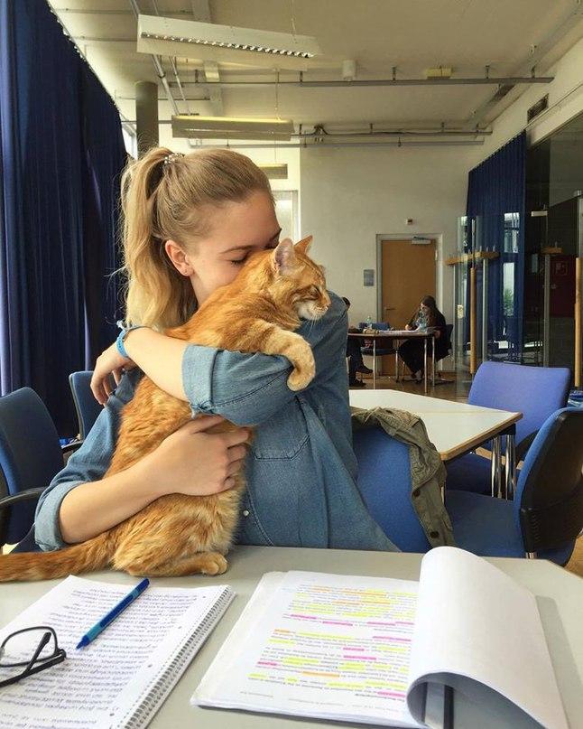 Котик приходит в универ каждый день спасать студентов обнимашками