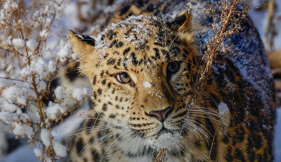 «Леопард сидел за деревом и наблюдал за нами»