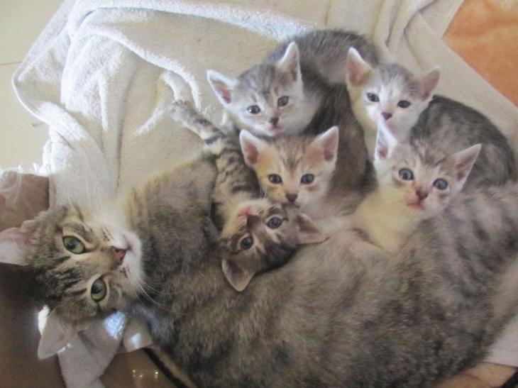 Кошки с пополнением — идиллия, достойная восхищения