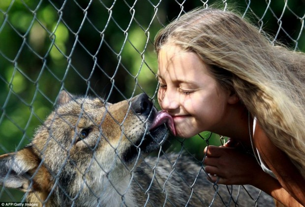 Белорусская семья воспитывает целое семейство волков