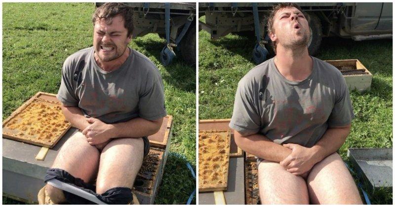 Новозеландский пчеловод на спор просидел 30 секунд на улье без трусов