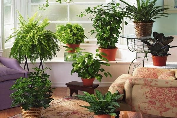 Подготовка комнатных растений к зимнему периоду