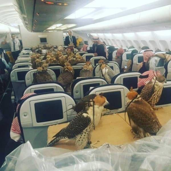 Странные снимки из самолетов