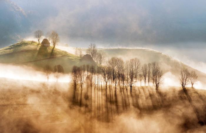 Дыхание леса. Автор: Cornel Pufan.