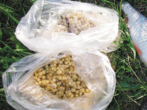 как запаривать пшеницу в термосе для рыбалки