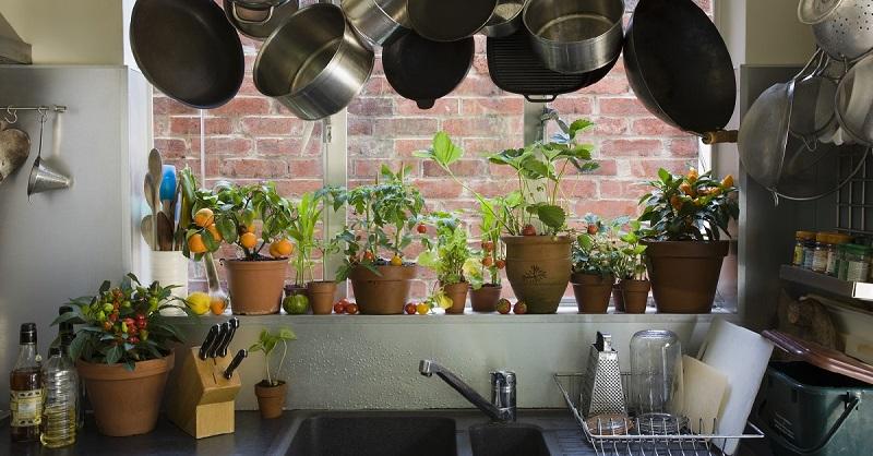 Озеленение кухни: 5 неприхот…