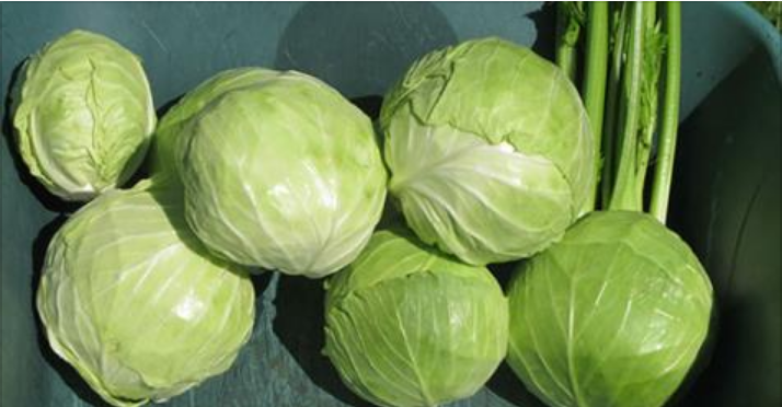 Как сохранить капусту свежей до лета?