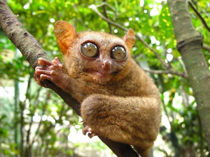 10 Удивительных животных мира