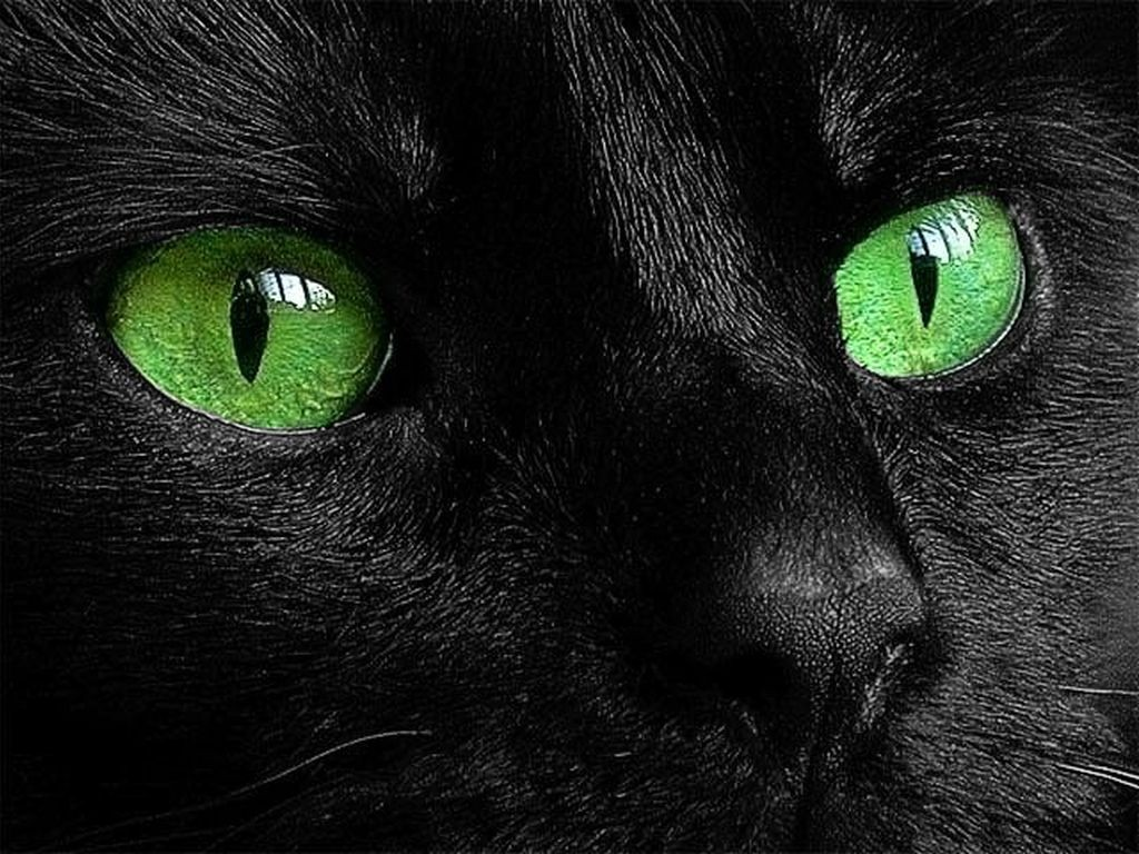 Интересные факты о черных кошках