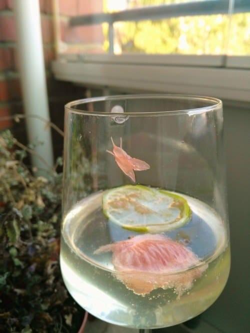 Когда грейпфрут прикидывается мухой на стекле бокала животные, обман зрения, подборка, показалось, прикол, удачный кадр, фото, юмор