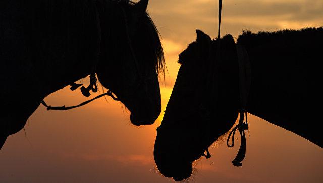 Конь почти откусил голову пр…