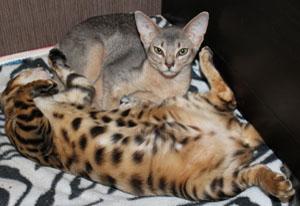 Дружные кошки
