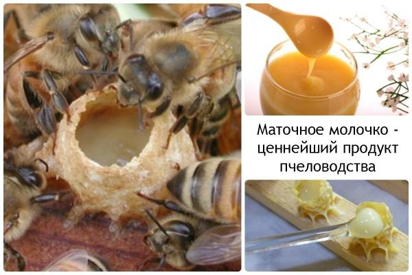 Продукты пчеловодства: маточное молочко