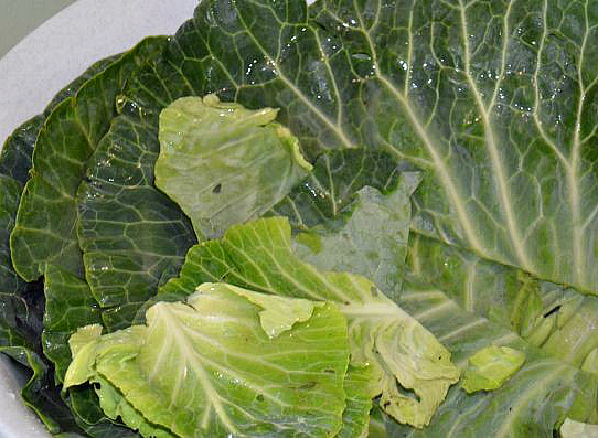 заготовки из листовой капусты