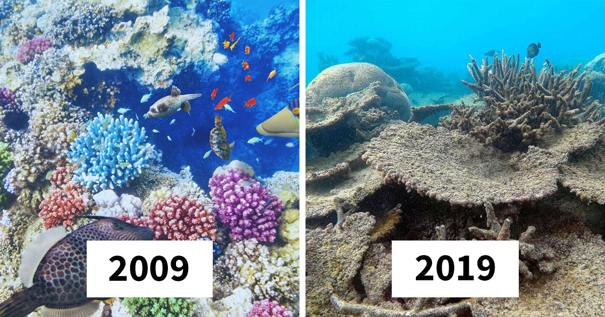 33 Of The Most Worrying #10YearChallenge Pics Of Mother Earth