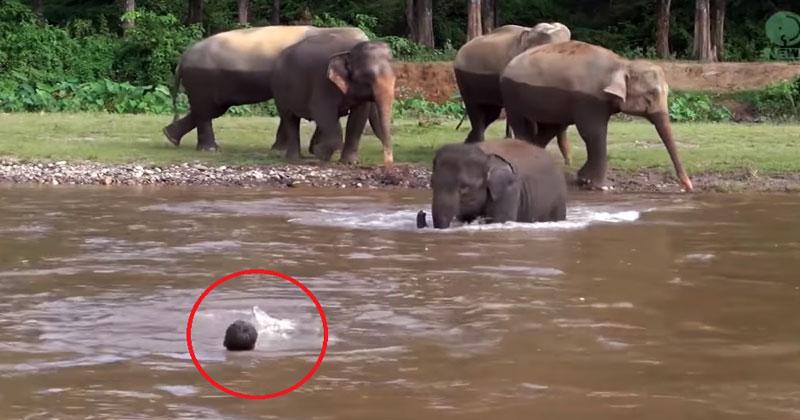 Мужчина попал в бурное течение реки и умолял о помощи. Взгляните, что сделал этот слон!