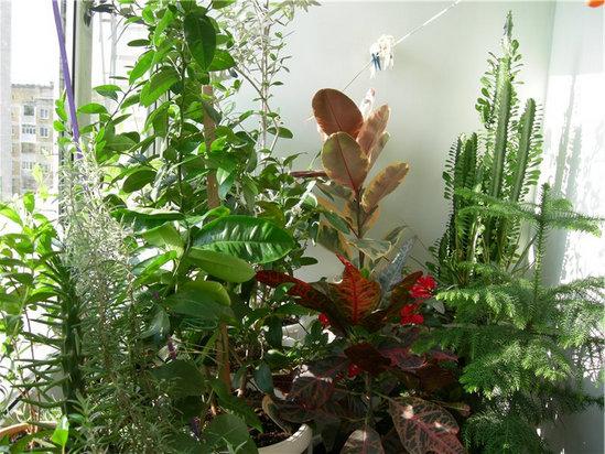 Зимний сад в доме. Советы новичкам