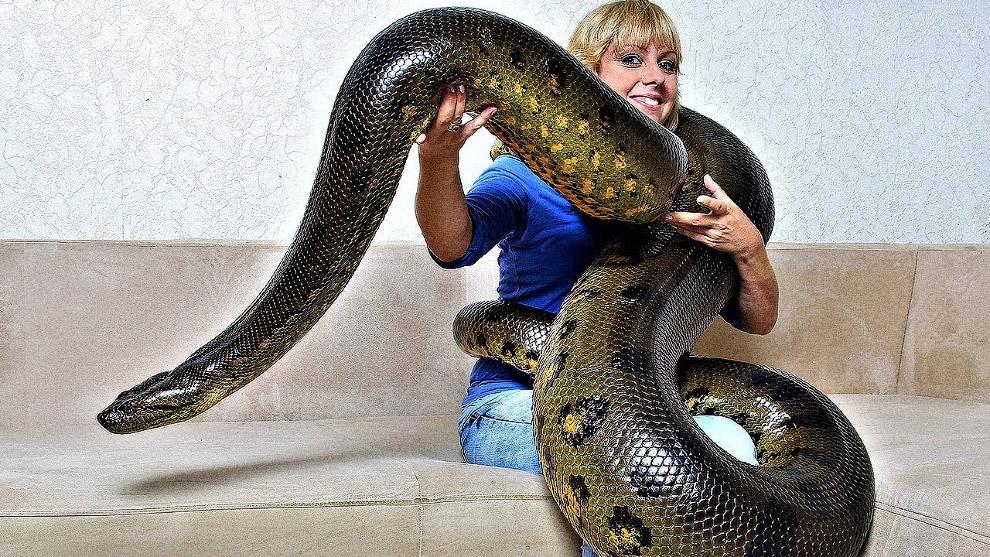 гигантская анаконда