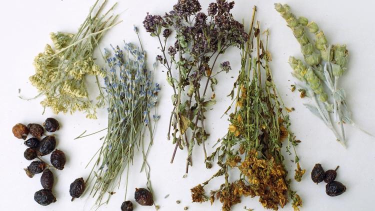 Травы для лечения почек