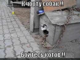 бойтесь котов
