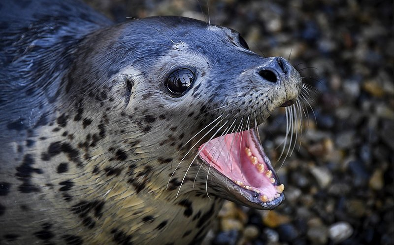 Хозяйка тюленей
