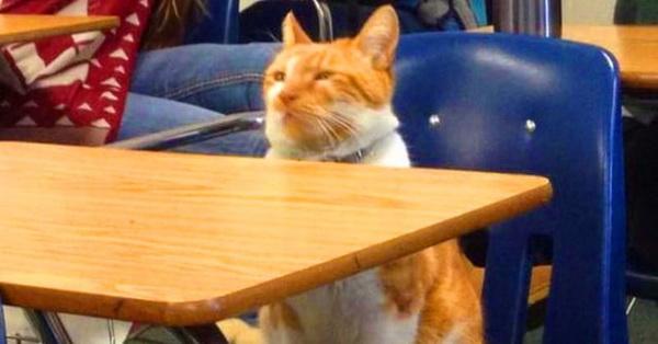 Кот ученый! В Калифорнии кота приняли в высшее учебное заведение