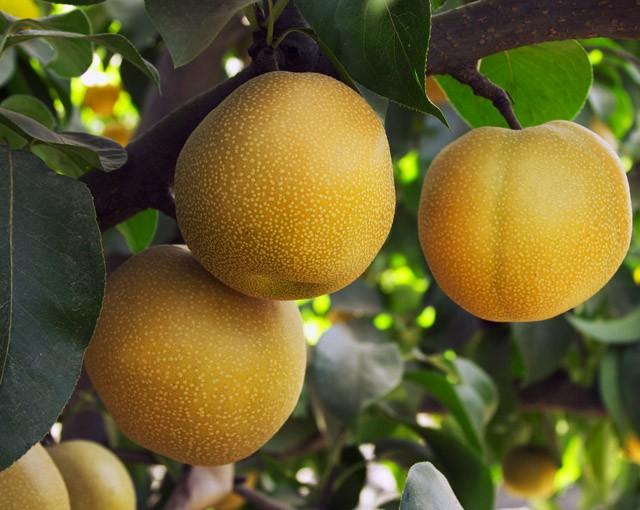 Интересные гибриды фруктов и овощей