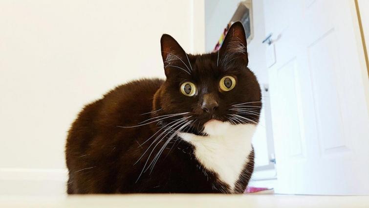 Необыкновенная красотка! Зельда – кошка со всегда удивлёнными и испуганными глазами
