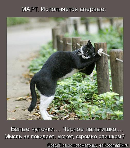 Пятничное котоматричное)