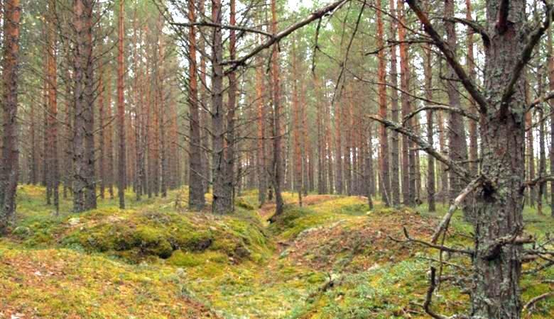 Аномальное место посреди лес…