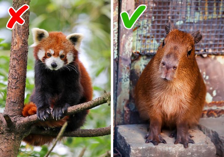 10 экзотических животных, ко…