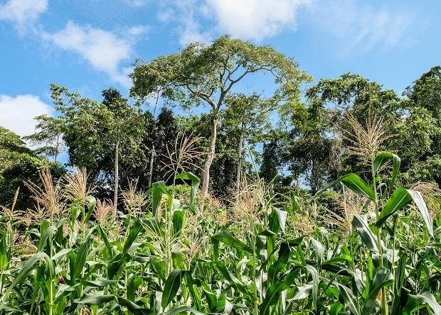Почва тропических лесов расс…
