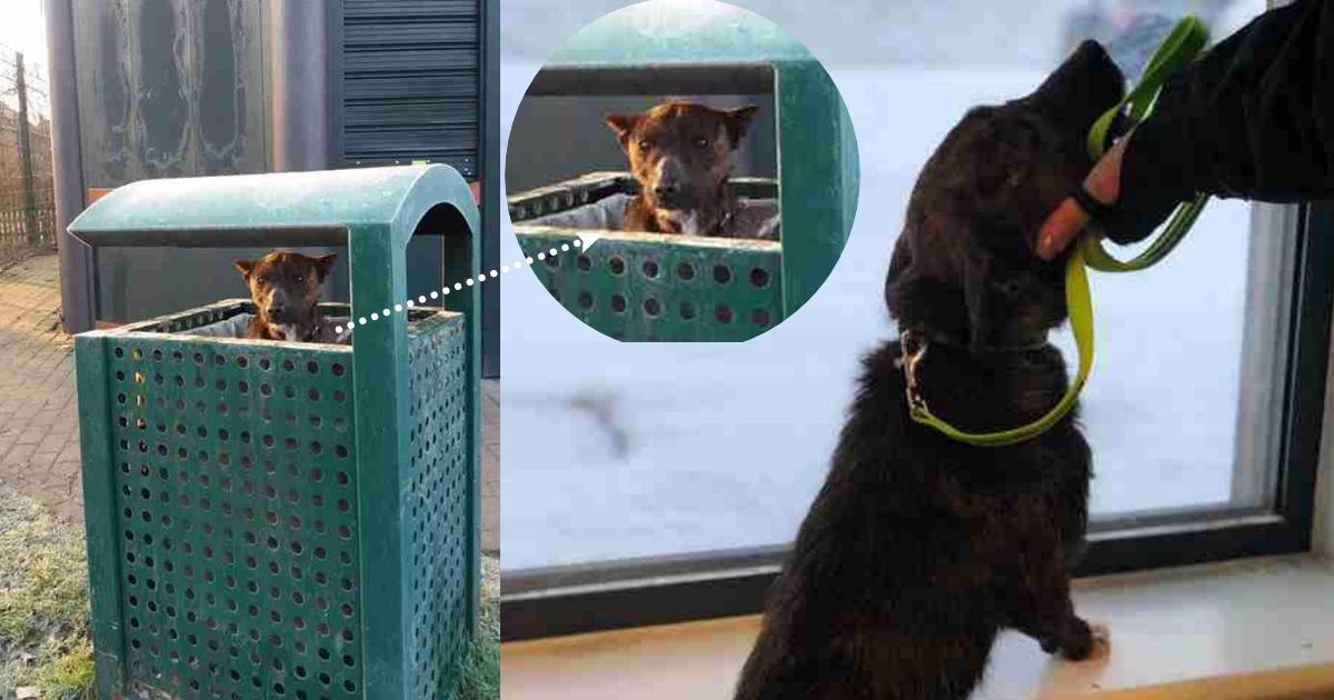 Люди заплакали, когда увидали в мусорном баке брошенного пса