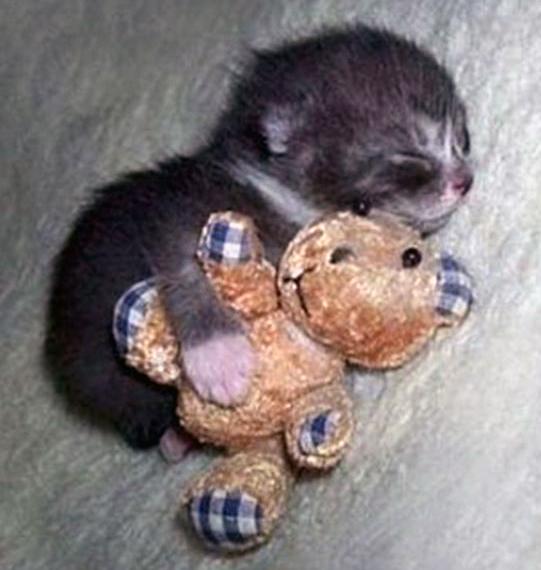 Самые милые фотографии животных с их любимыми игрушками