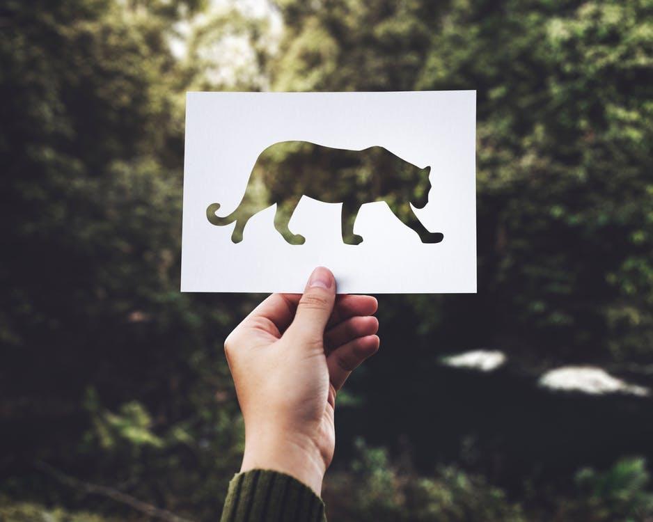 Во Владивостоке дети написали ко Дню тигра книгу