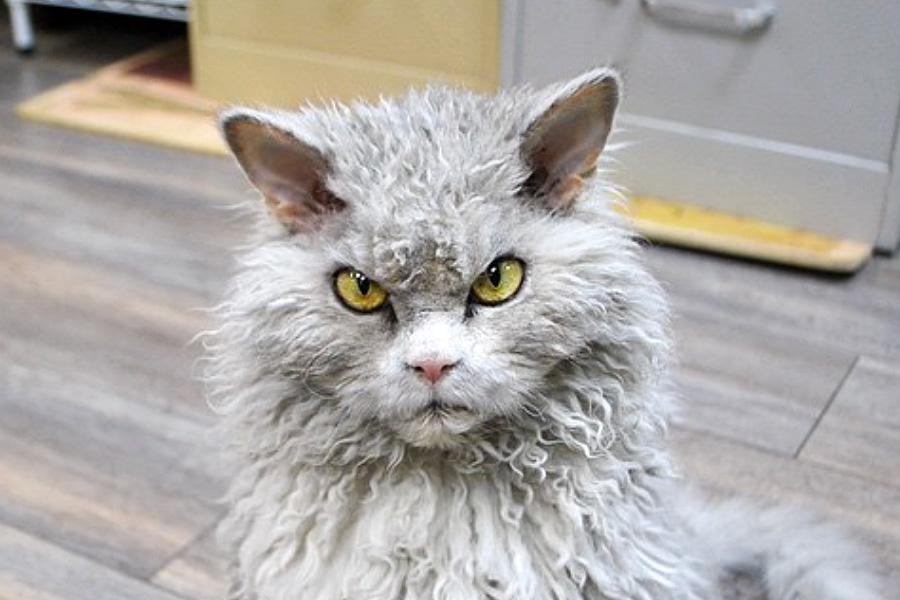 Развелись из-за кота