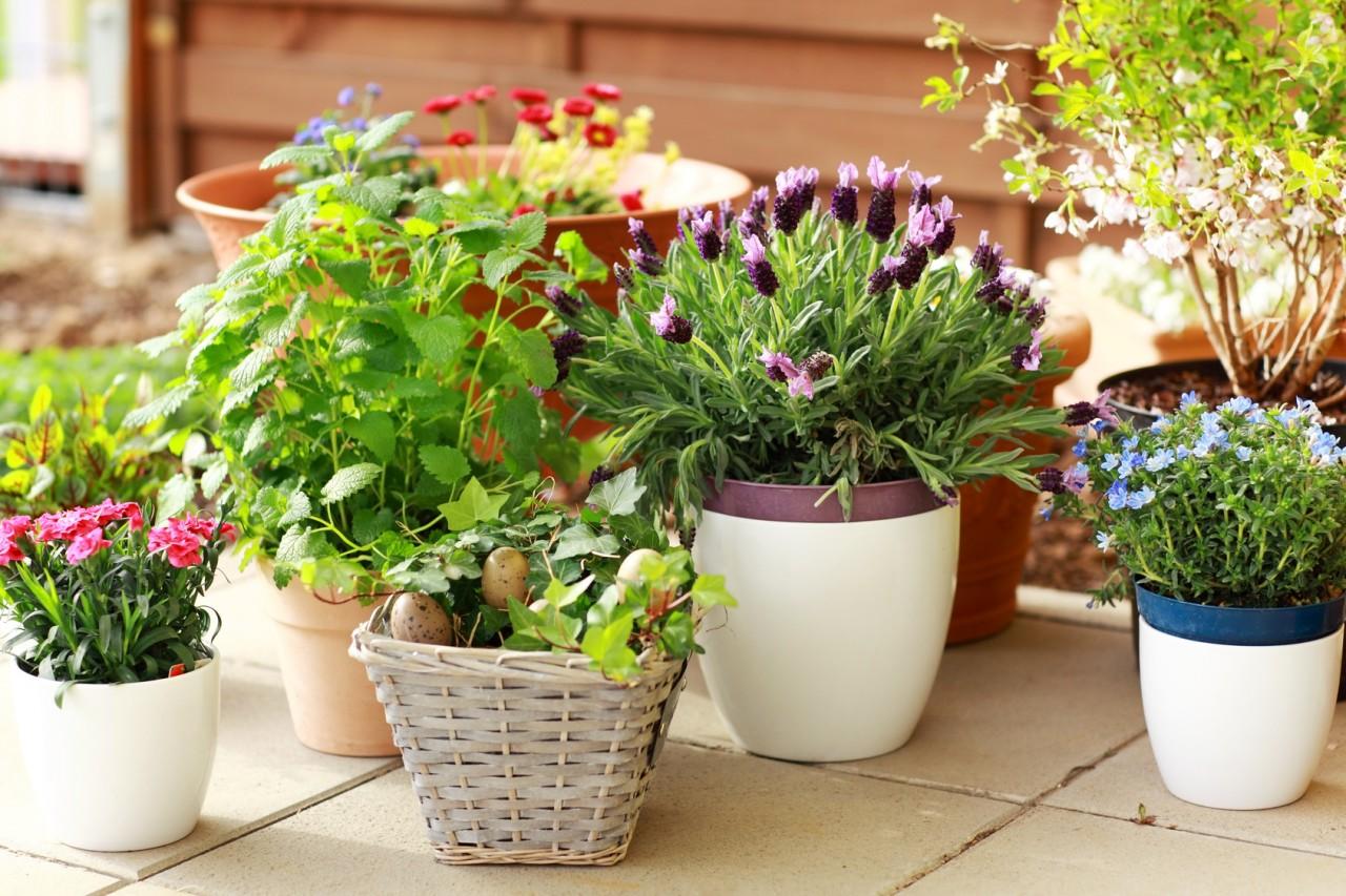 Простые способы избавления от вредителей в горшках с комнатными растениями