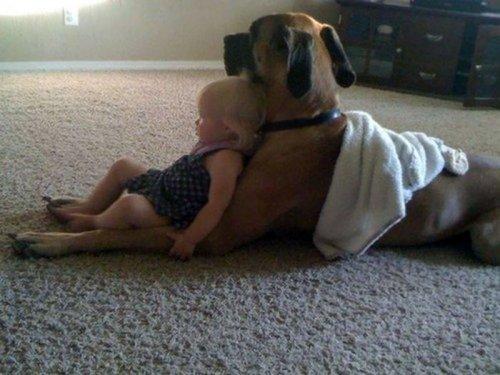 Очаровательные примеры безусловной любви собак, которые растопят ваше сердце