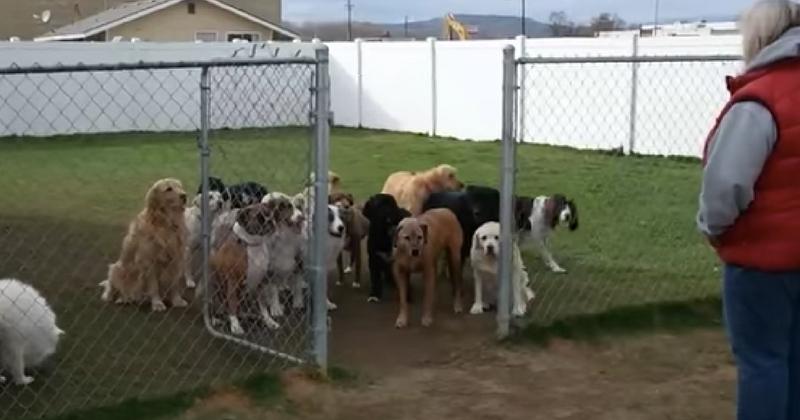 Ничего себе, это самые воспитанные собаки! Они терпеливо ждут, пока не назовут их имя! Смотреть до конца — там прикол!